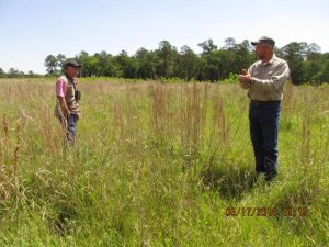 At the largest compartment, which was almost all exotic invasive King Ranch bluestem before restoration.