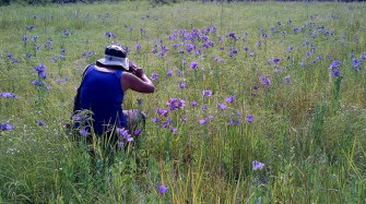 Sam Houston National Forest - Blackland Prairie July 12 Bluebells field Compartment 2. 140712