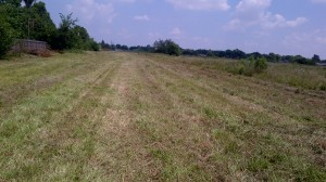 DPP mowed. Unmowed area to the right.