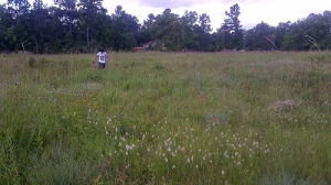 Marysee Prairie in Liberty County