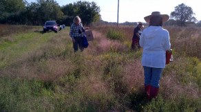 Seed Collecting at Nash Prairie, October 16, 2014