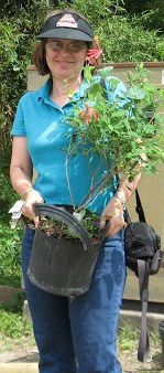 Linda with a pot of Coral Honeysuckle