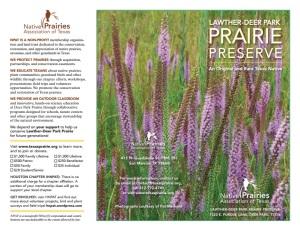 DPP Brochure p1