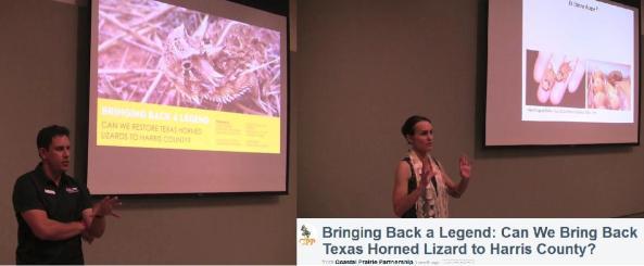 Horned Lizard 151028