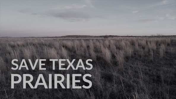 Maddin_012316_KHarms-save-texas-prairies-with-text - denim