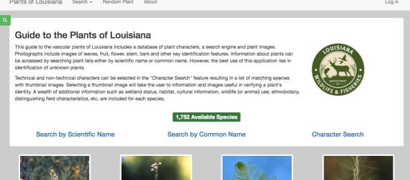 Fantastic Plant Database by Larry Allain | HNPAT : Houston Chapter